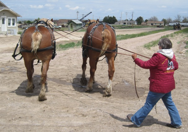 draft horse driving